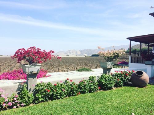 Garden at hotel Vinas Queirolo - Ica