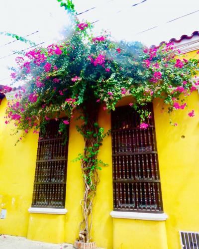 Detail of wall , street of Cartagena de Indias - Colombia